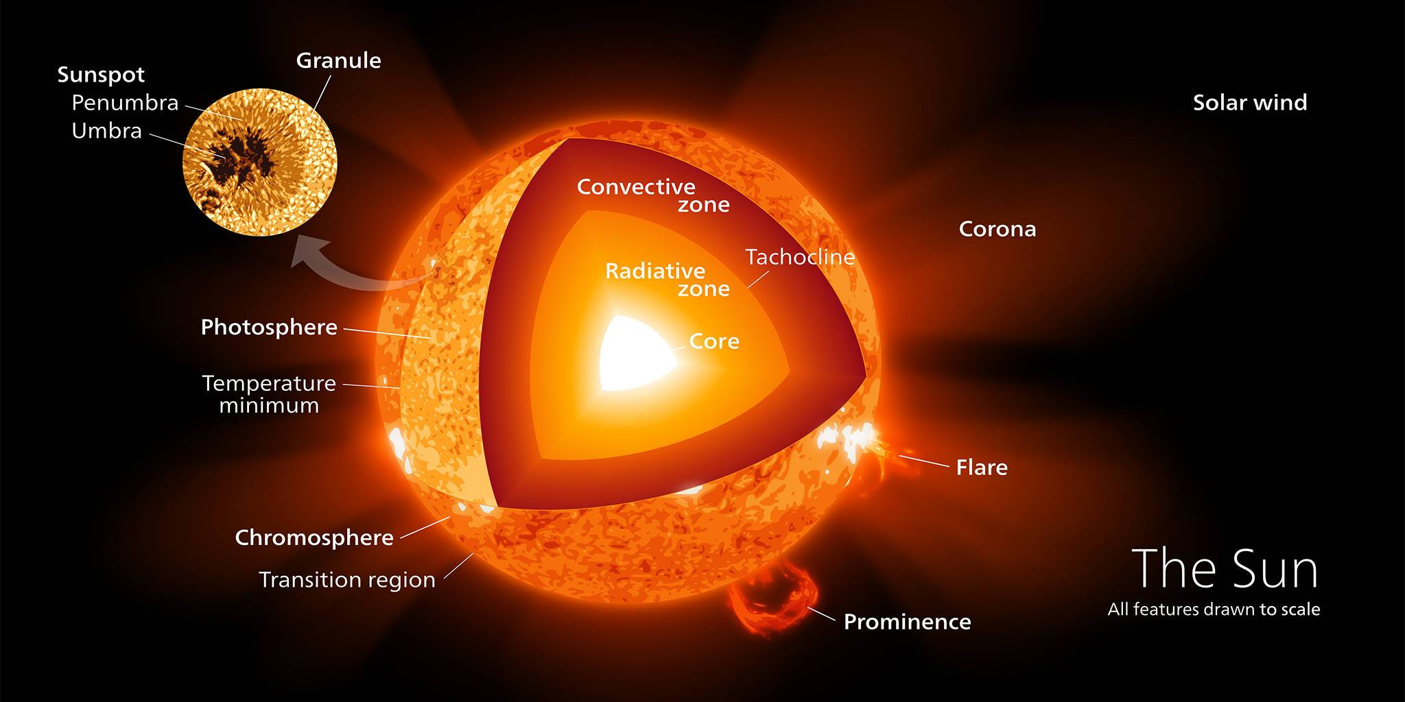 The Sun<em>Credit: https://commons.wikimedia.org/wiki/User:Kelvinsong</em>